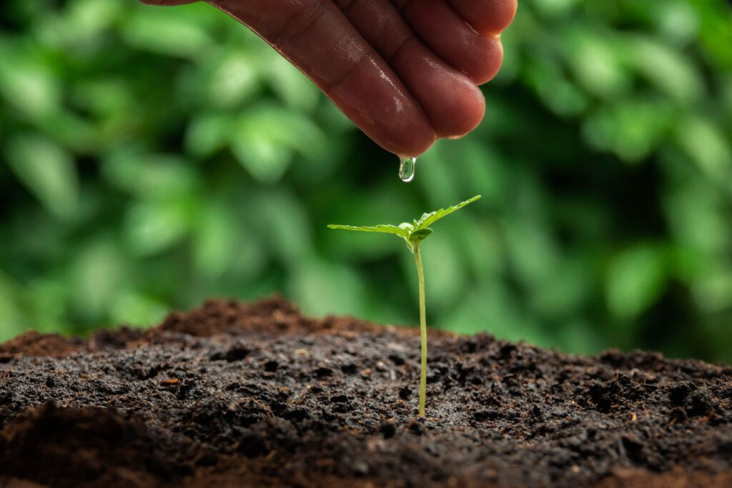 7 Golden Rules of Watering for Healthier Cannabis Plants and Better Revenue