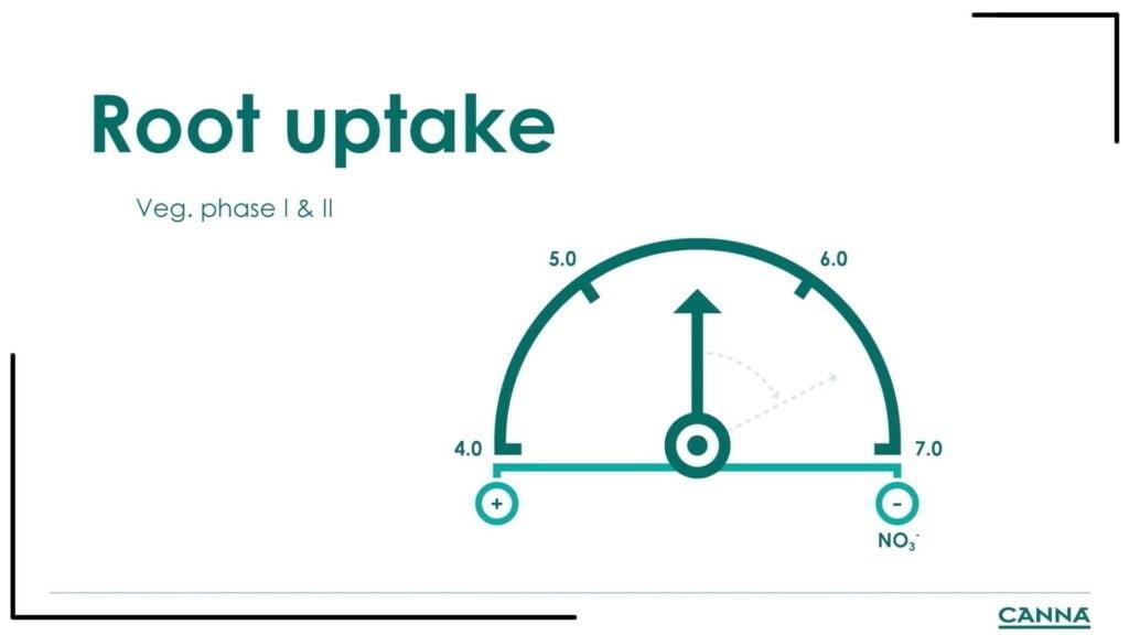 CANNA Root Uptake Veg Phase I & II