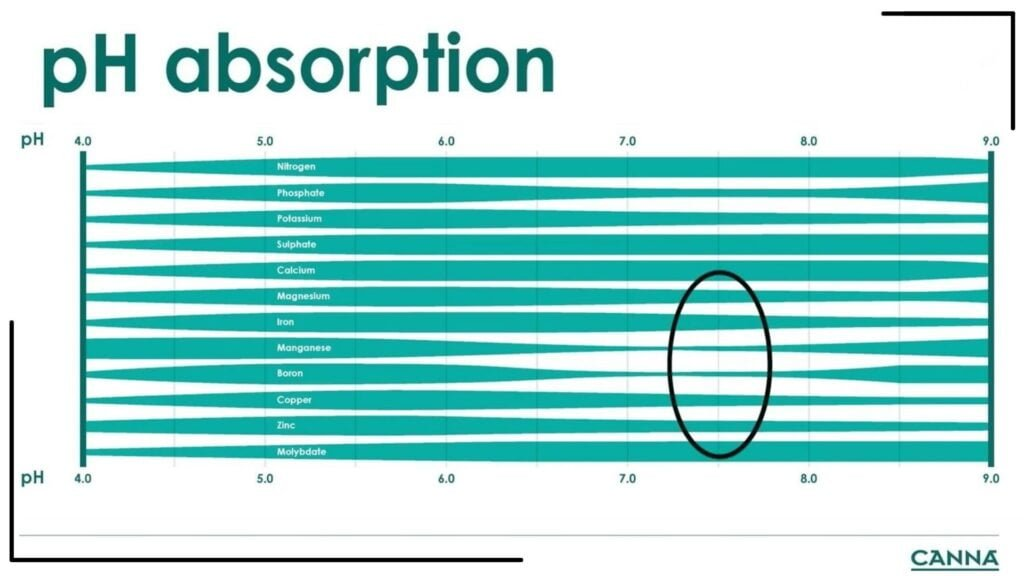 Canna Poor Absorption Chart