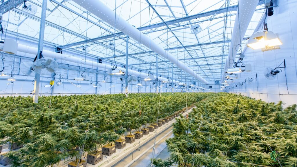 """""""Cannabis Cultivation is More Math than Science: The Role of Data in A Successful Grow Operation"""" — Cannabis Science and Technology"""