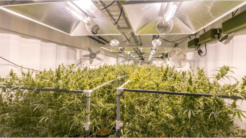 Indoor Horticulture Efficiency To Canadian Cannabis - Doing it right means planning to grow on a large scale, but you'll need to do some hard thinking, research, and great planning to make this work.