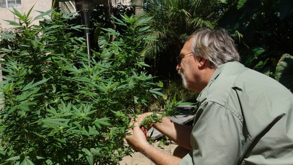 Grandpa Are Growing More Weed Than Ever!