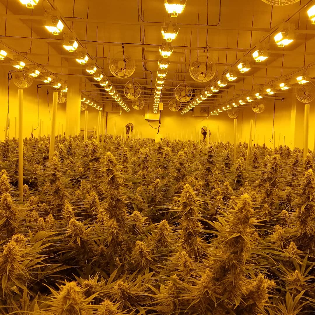 7 Ways To Go Around Challenges in Craft Cannabis