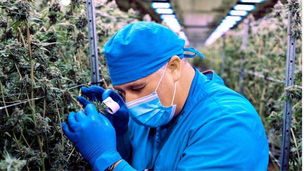 Contract Growing Jake Ward head grower at Nova Scotia organic cannabis company Aqualitas Inc