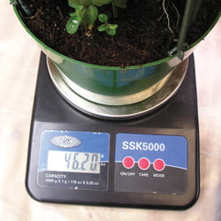 If you are growing in pots weight is another telling factor you should consider so best is to pick up the p